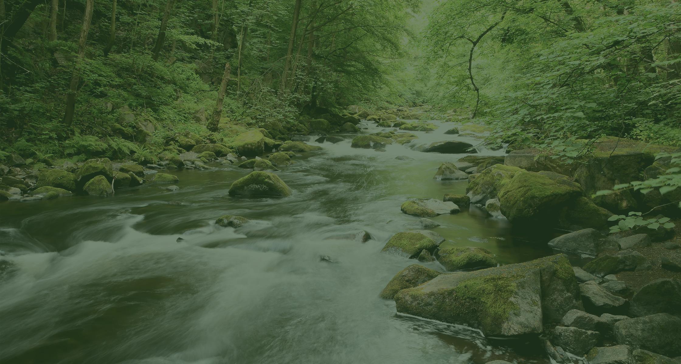 Rein dekoratives Element. Zu sehen ist ein Bach im Wald, welche über viele mit Moos bewachsenen Steine hinwegfließt. Das Bild hat insgesamt ein grünes Overlay aus gestalterischen Zwecken.